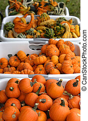 Basket of pumpkins