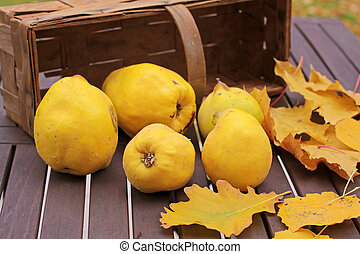Basket of quinces and autumn leaves on garden table