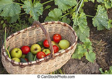 Basket of vegetables in the garden.