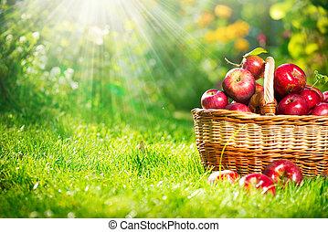 basket., organisk, orchard., trädgård, äpplen