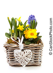 Basket spring flowers over white background