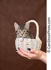 basket with a kitten in the palm of your hand.