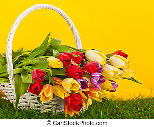 Basket with colorful tulips.