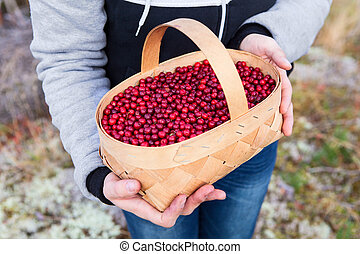 Basket with ripe red bilberries in the hands of a woman