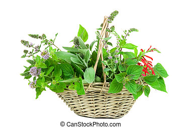 Basket with sage and mentha, different genus