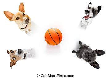 basketball  and group of   dogs
