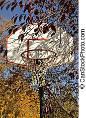 Basketball backboard  autumn colors