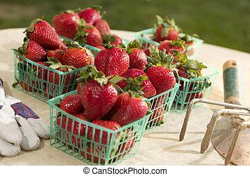 Baskets of Fresh Strawberries