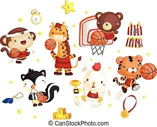 basquetebol, animal, equipe
