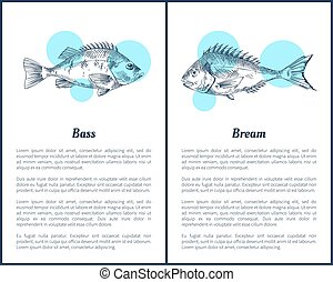 Bass and Bream Fish Posters Vector Illustration - Bass and...