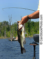 Bass Competition - Tournament fishing includes competition. ...