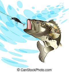 Bass fish, fishing for perch with a vobler on a splash water background
