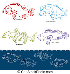 Bass Fish Types - An image of a four types of bass fish.