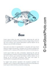 Bass or Bream Marine Creature Hand Drawn Poster - Bass or...