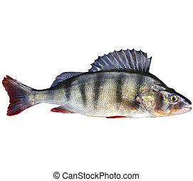 basse, poisson eau douce, perche