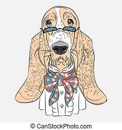 basset, divertido, perro, vector, hipster, sabueso, ...