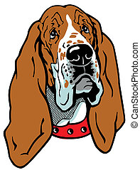 basset head - dog head, basset hound breed, illustration...