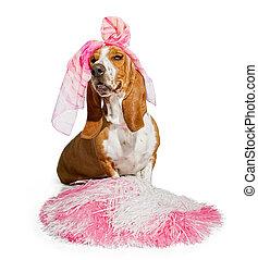 Basset Hound Cheerleader Dog Stock
