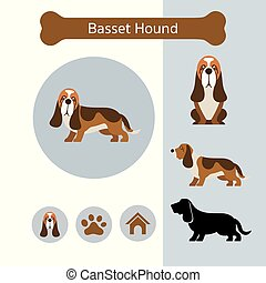 Basset Hound Dog Breed Infographic
