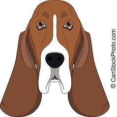 Basset Hound dog isolated on white background vector illustration