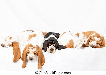 Basset hound dogpile - litter of sleeping basset hound ...