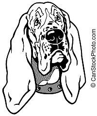 basset hound head