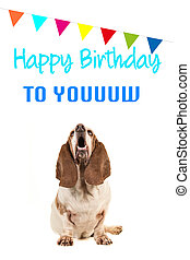 Basset hound looking up and singing text happy birthday to you on a birthday card with party garland on a white background