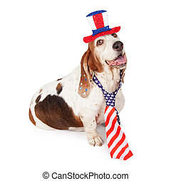 Basset Hound on Fourth of July - A happy Basset Hound dog...