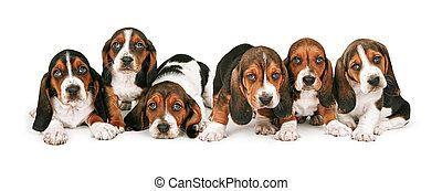 basset, hundebabys, abfall, jagdhund