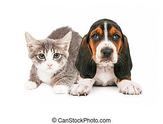 Basset, jagdhund, junger Hund, kã¤tzchen