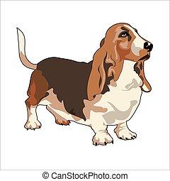 basset, réaliste, vecteur, chien de chasse, dessin