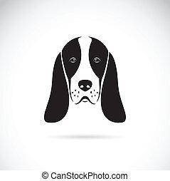bassotto, testa, vettore, cane da caccia, immagine