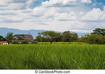 bastón, de, colombia, las, hermoso, montañas, azúcar, vista, campos, paisajes, del, paramo, región, hermosas, valle, cauca