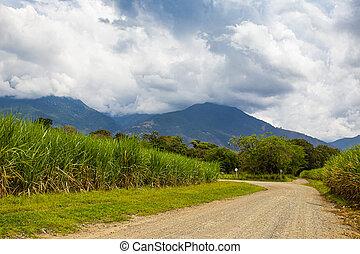 bastón, de, colombia, las, rural, montañas, unpaved, azúcar, camino, campo, del, paramo, región, hermosas, valle, cauca