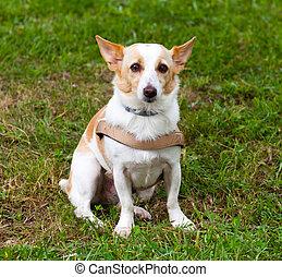 bastardo, cane, sedendo erba