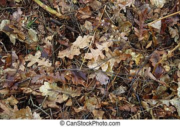 basura, hoja, otoño