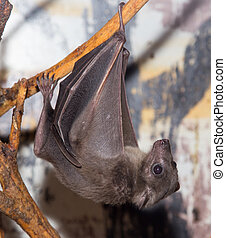 bat at the zoo