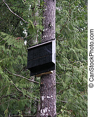Bat Boxv - Bat box to help bat conservation in southern...