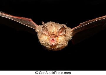 Bat Cave - A bat flying in a cave