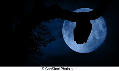 Bat Flies Off Past Moon In The Forest - Bat silhouetted...