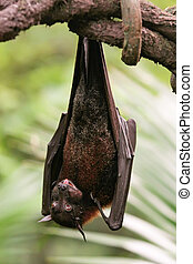 Bat Hanging Upside Down on  Branch