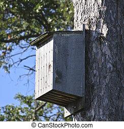 bat house on pine tree