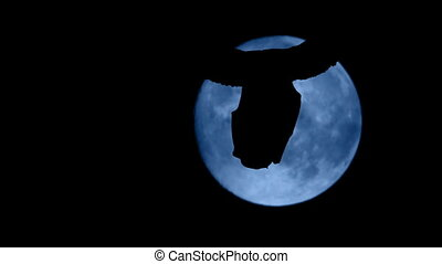 Bat In Front Of Full Moon Flies Off - Bat silhouetted...