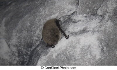 Bat in the cave