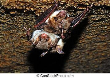 Bat in their natural habitat