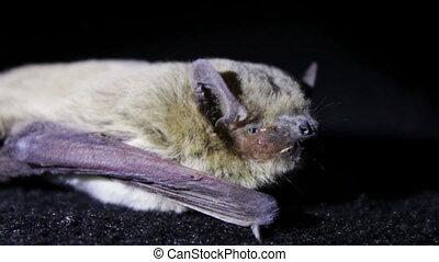 Bat night lying on the ground.