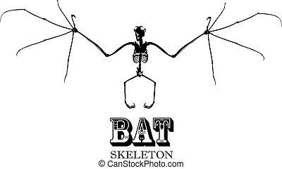 Bat Skeleton In Black and White