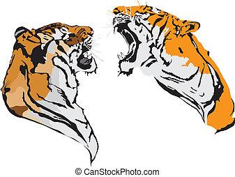 batalla, tigres