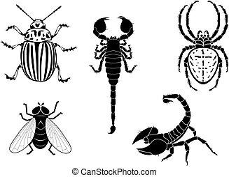 batata, besouro, mosca, escorpião, e, aranha