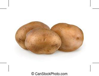 batatas, ilustração, vetorial